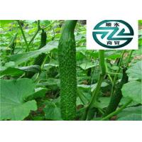 Quality Green Cucumber Cucumis Sativus , Delicious Cucumis Sativus Fruit for sale