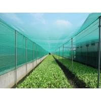Quality HDPE Monofilament Inst Mesh Netting 20 30 40 50 Mesh Count Anti Insect Proofing Net for sale