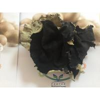 Quality Factory Price Thick Dried White Back Black Fungus Mushroom Whole (5CM ABOVE) Wood Ear for sale