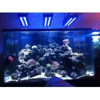 China led coral reef tanking light on sale