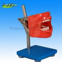 China Dental teaching Manikin simulator / Phantom head pratical training wholesale