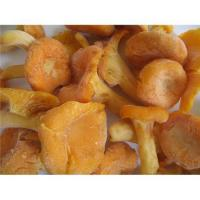 Quality Chanterelle,wild mushrooms for sale
