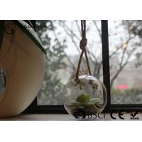 Clear Glass Hanging Terrarium / Hanging Glass Plant Holders Anti Corrosion