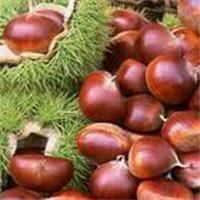 Quality Chestnut,Peanut in Shell,Peanut,Peanut Kernel for sale