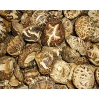 Buy natural organic mushroom truffle fungus farm foods at wholesale prices