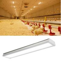 Buy cheap Anticorrosion LED Tri Proof Light Poultry Farm Lighting IP65 CE RoHs UL DLC from wholesalers