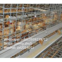 China Baby Chick Cage In India Galvanized Baby Chicks Breeding Cage For Poultry Equipments on sale