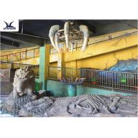 Quality Indoor Museum Life Size Dinosaur Replicas , Sunproof Dinosaur Skeleton Replica for sale