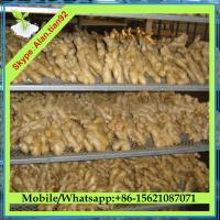 China Dry Ginger, Air Dried Ginger Price on sale