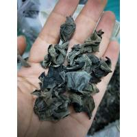 Quality Factory Price Bulk Dried Mushroom Black Fungus 1.0-1.8CM to Europe for sale
