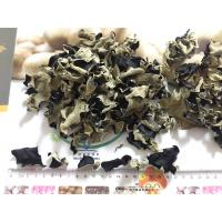 Quality Factory Price Premium NEW CROP Dried Black Fungus within 5 CM (Auricularia Auricula) for sale