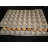 Buy high quality egg tray making machine at wholesale prices