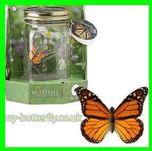 Butterfly in a jar supplier
