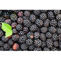 Quality Spray Dried Organic Food Ingredients Blackberry Fruit PowderFor Skin Care for sale