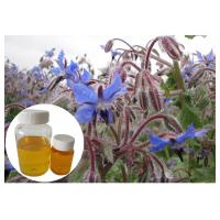 Quality Natural Extract Borage Oil Liquid Omega 6 , Borage Oil For Skin And Hair Hexane Refining for sale