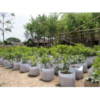 Quality Fashionable Design  Plant Grow Bags 0.1 - 3.5mm Thickness Optional Color for sale