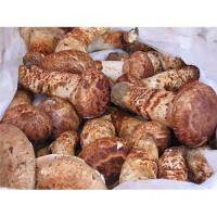 Quality Matsutake,wild mushrooms for sale