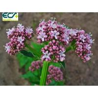 Quality Sedative Valerian Root Herbal Supplement Functional Food Ingredients For Beauty Effect for sale