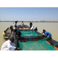 Quality Tilapia Farming Cage for sale