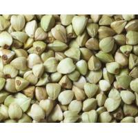 Quality Factory supply bulk Total Isoflavone 30% 10:1 Buckwheat Extract for sale