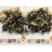 Quality Factory Price Premium NEW CROP Washed Dried White Back Black Fungus within 5 CM for sale