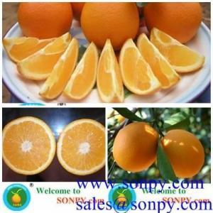 Quality navel orange,fresh orange,mandarin orange for sale