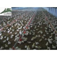 China Poultry equipment on sale