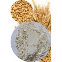 Quality Vital Wheat Gluten High Quality for Food Application 75% Min. (Nx5.7) for sale