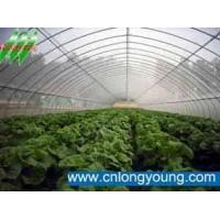 Quality single span agricultural greenhouse for sale