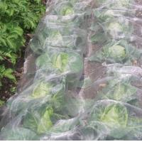 Quality Agricultural Garden White Fly Screen Netting Anti Aphid Insect For Cabbage for sale