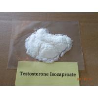 White Testosterone Isocaproate Steroid Hormone For Mus / Raw Steroid Powders