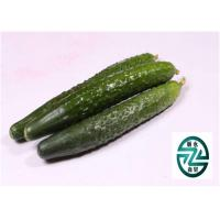 Quality Natural Cucumber Cucumis Sativus , Cucurbitales Cucumis Sativus L for sale