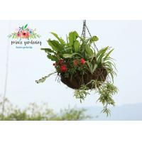 Quality Classic Hanging Basket Flowers Gardening Decorate For Indoor / Outdoor for sale