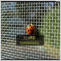 China Aluminum window screes, insect screen for doors and windows, 18x14mesh, Factory direct supply on sale