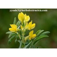 Quality DMF Cytisine 98%HPLC,  CAS No.: 485-35-8,White or pale yellow powder, natural ingredient, Shaanxi Yongyuan for sale