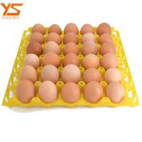Quality Custom High Quality Professional Plastic Birds Egg Tray With Holes WhatsApp:15638238763 for sale
