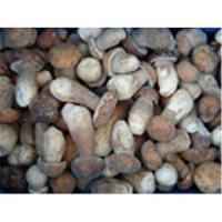Quality Frozen boletus edulis,wild mushrooms for sale