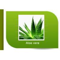 Quality Aloe vera for sale