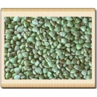 Quality Buckwheat Hulled for sale