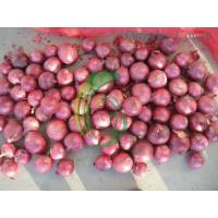 Quality red onion.exporter for sale