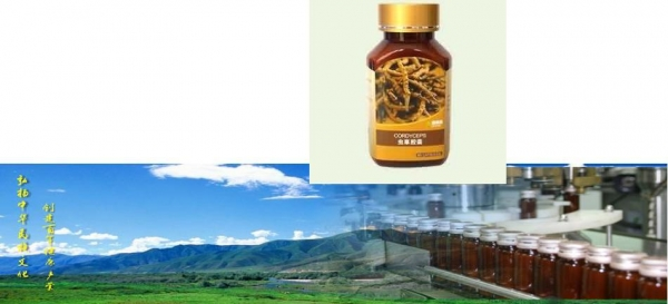 Buy Cordyseps capsules at wholesale prices