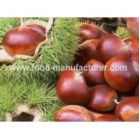 Quality Freeze Dried Fruit Freeze Dried Chestnut for sale