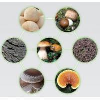 Quality Edible and Medicinal Mushrooms for sale