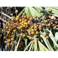 Quality Hot Products Saw Palmetto Berry Extract for sale