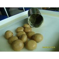 Quality Number:9115324016Name:Canned mushroom (whole)Memo:D.W.1500GSpec:2840gX6tinsClass:canned for sale