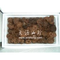Quality YamafukiName:Fresh Truffle for sale