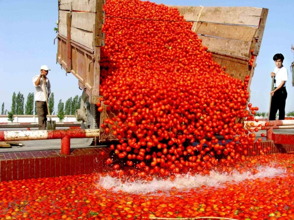 Buy Tomato paste in drum packing Tomato paste in drum packing Tomatopasteindrumpacking at wholesale prices