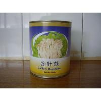 Quality Mushroom Can Golden Mushroom Product Code: ydaer_1 for sale