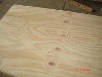 Buy Three-layer shuttering panel Pine plywood at wholesale prices