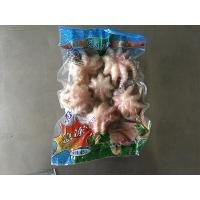 Quality mollusk serious Small Octopus for sale